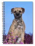 Border Terrier Dog, In Heather Spiral Notebook