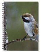 Boreal Chickadee Spiral Notebook