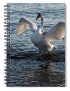 Born To Rule Spiral Notebook