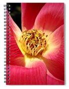 Borrowed Rose Spiral Notebook