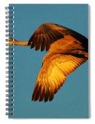 Bosque Del Apache Sandhill Crane Golden Light Spiral Notebook