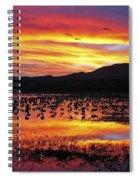 Bosque Sunset II Spiral Notebook