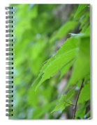 Boston Ivy Bokeh Spiral Notebook
