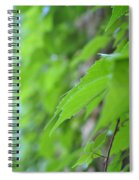 Boston Ivy Bokeh Spiral Notebook