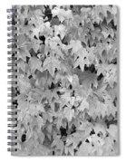 Boston Ivy In Monochrome Spiral Notebook