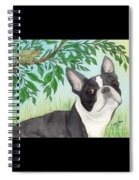 Boston Terrier Dog Tree Frog Cathy Peek Art Spiral Notebook