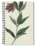 Botanical Engraving Spiral Notebook