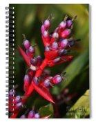 botanical garden in Costa Rica 2 Spiral Notebook