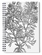 Botany: African Rue, 1597 Spiral Notebook