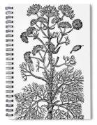 Botany: Giant Fennel, 1597 Spiral Notebook