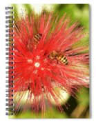 Powder Puff Flower With Bees Spiral Notebook