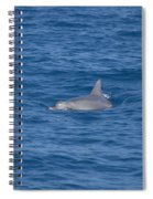 Bottlenose Dolphin Spiral Notebook
