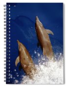 Bottlenose Dolphins Tursiops Truncatus Spiral Notebook