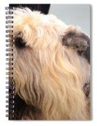 Bouvier Des Flandres Spiral Notebook