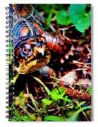 Box Turtle Spiral Notebook
