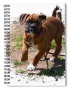 Boxer Puppy 14-1 Spiral Notebook