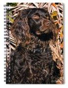 Boykin Spaniel Portrait Spiral Notebook