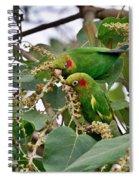 Brace Of Chiriqui Conures Spiral Notebook