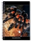 Brachypelma Smithi - Redknee Tarantula Spiral Notebook