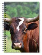 Braford Bull Spiral Notebook