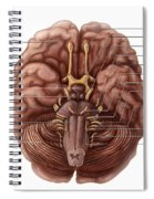 Brain And Cranial Nerves Spiral Notebook