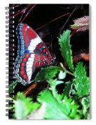 Branch Encounter Spiral Notebook