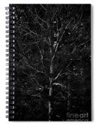 Branch Patterns Spiral Notebook