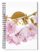 Branch With Cherry Blossoms Spiral Notebook