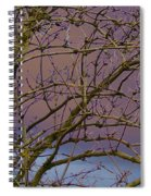 Branches Spiral Notebook