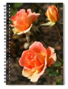 Brass Band Roses In Autumn Spiral Notebook