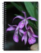 Brassanthe Maikai Orchid Spiral Notebook