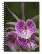 Brassocattleya Morning Glory Spiral Notebook