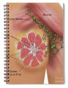 Breast Anatomy Spiral Notebook