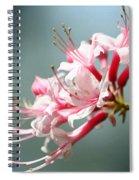 Breathtaking Beauty Spiral Notebook