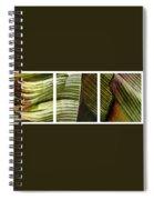 Breeze - Banana Leaf Triptych Spiral Notebook