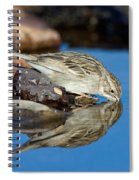Brewers Sparrow At Waterhole Spiral Notebook
