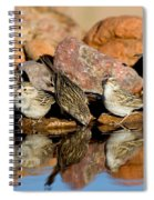 Brewers Sparrows At Waterhole Spiral Notebook
