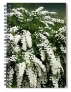 Bridal Wreath Spirea - White Flowers - Florist Spiral Notebook