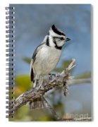 Bridled Titmouse Spiral Notebook