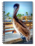 Brief Pelican Encounter  Spiral Notebook