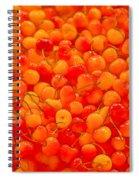 Bright And Orange Spiral Notebook