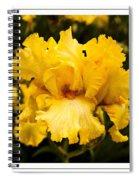 Bright Bright Spring Yellow Iris Flower Fine Art Photography Print  Spiral Notebook