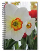 Bright Daffodils Spiral Notebook