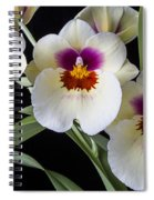 Bright Miltonia Orchids Spiral Notebook