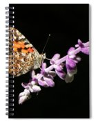 Painted Lady Butterfly On Purple Flower Spiral Notebook