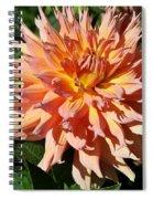 Bright Peachy Star Spiral Notebook