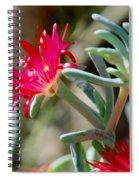Bright Pink Flower Spiral Notebook