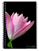 Bright Pink Trumpet Lily  Spiral Notebook