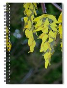 Bright Tidings Spiral Notebook