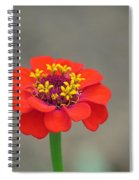 Bright Zinnia Spiral Notebook